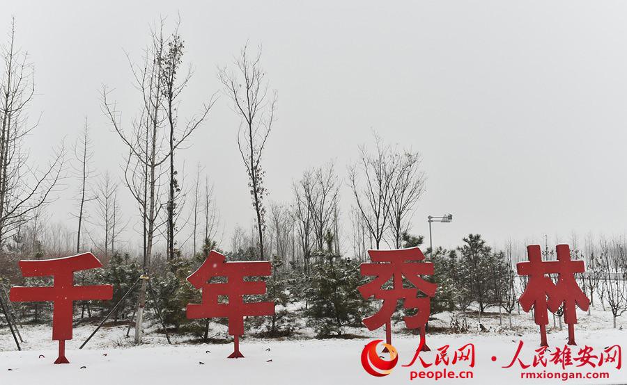 """雪中的雄安新�^""""千年秀林""""。�⑾蜿��z(she)"""